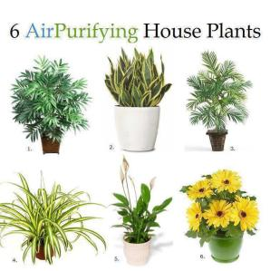 6indoorairpurifyingplants
