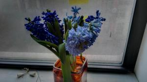 Hyacinths in a terribly square container -- the smell is amazing and filters through a teeny-tiny dorm room nicely